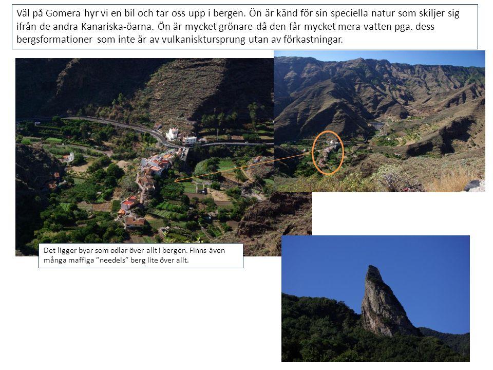 Väl på Gomera hyr vi en bil och tar oss upp i bergen. Ön är känd för sin speciella natur som skiljer sig ifrån de andra Kanariska-öarna. Ön är mycket