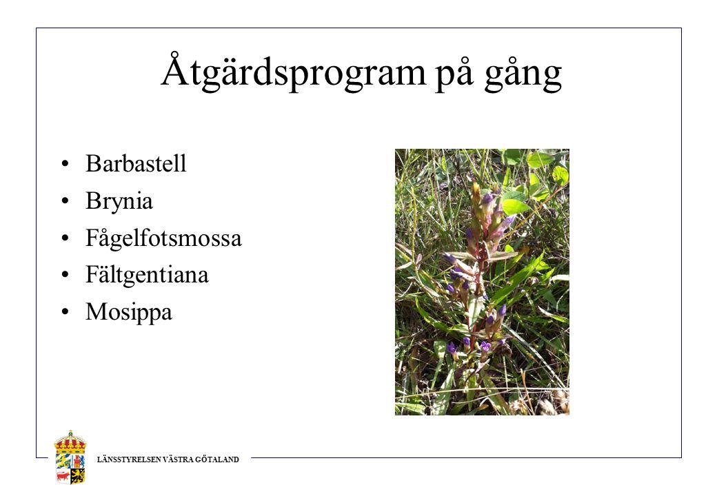 LÄNSSTYRELSEN VÄSTRA GÖTALAND Åtgärdsprogram på gång Barbastell Brynia Fågelfotsmossa Fältgentiana Mosippa