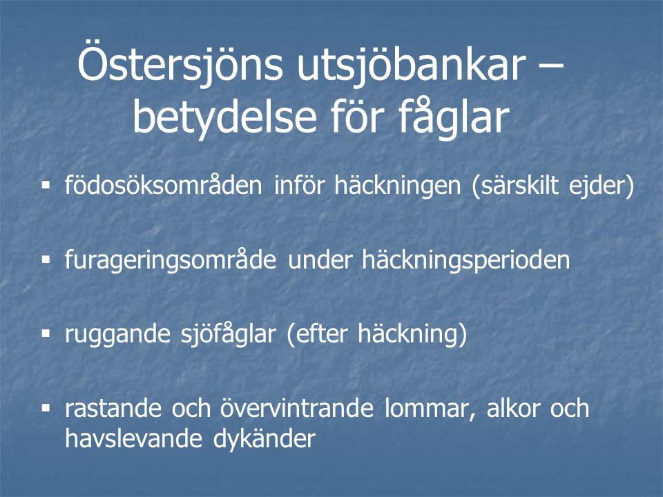 Östersjöns utsjöbankar – betydelse för fåglar   födosöksområden inför häckningen (särskilt ejder)   furageringsområde under häckningsperioden   ruggande sjöfåglar (efter häckning)   rastande och övervintrande lommar, alkor och havslevande dykänder