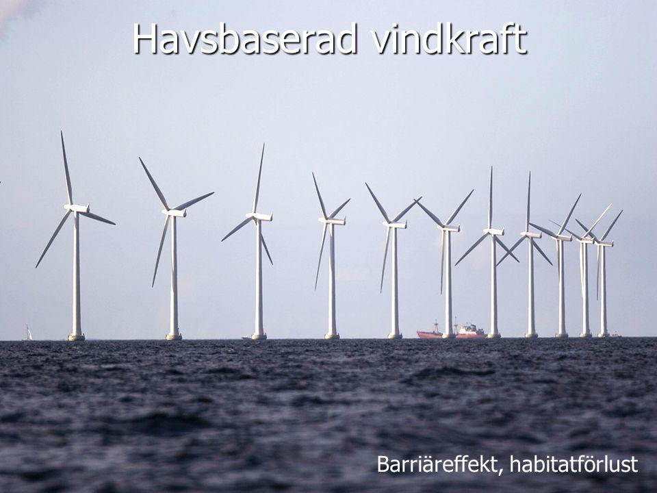 Havsbaserad vindkraft Barriäreffekt, habitatförlust