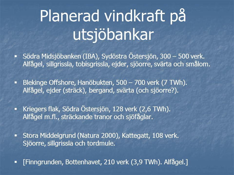 Planerad vindkraft på utsjöbankar   Södra Midsjöbanken (IBA), Sydöstra Östersjön, 300 – 500 verk.