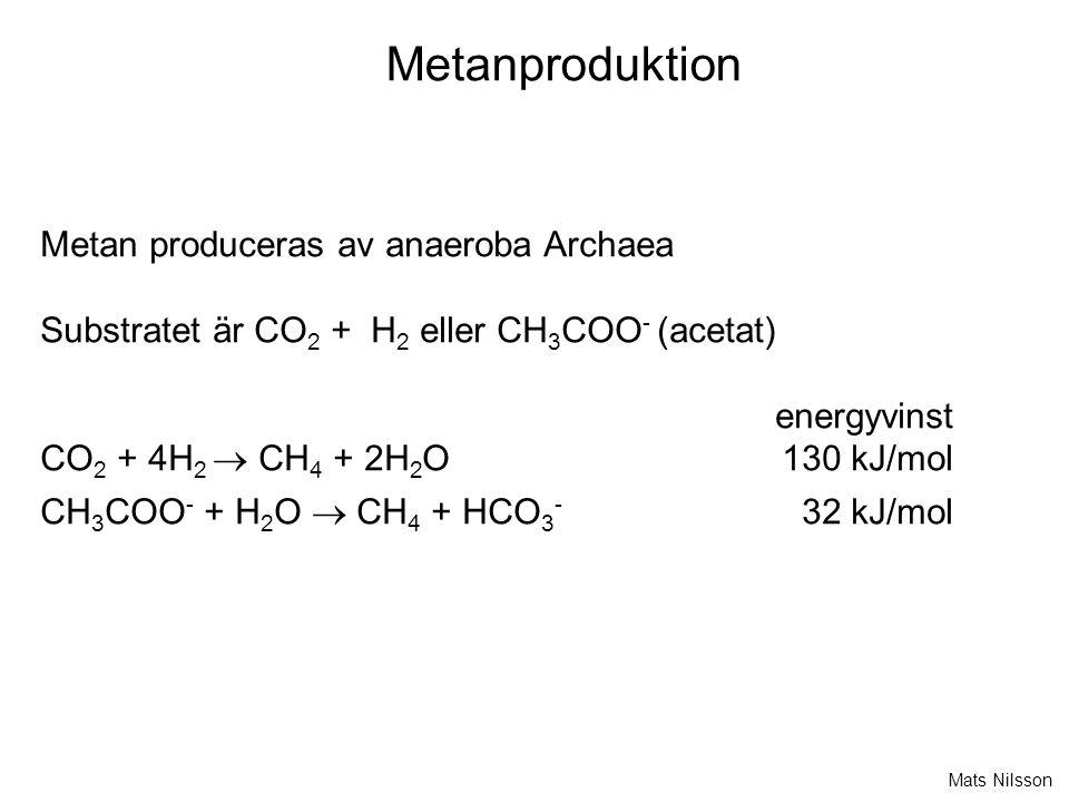 Metanproduktion Metan produceras av anaeroba Archaea Substratet är CO 2 + H 2 eller CH 3 COO - (acetat) energyvinst CO 2 + 4H 2  CH 4 + 2H 2 O130 kJ/mol CH 3 COO - + H 2 O  CH 4 + HCO 3 - 32 kJ/mol Mats Nilsson
