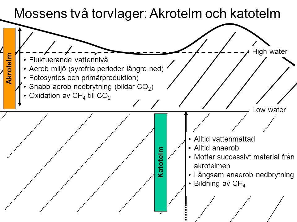 Mossens två torvlager: Akrotelm och katotelm Katotelm High water Low water Akrotelm Fluktuerande vattennivå Aerob miljö (syrefria perioder längre ned) Fotosyntes och primärproduktion) Snabb aerob nedbrytning (bildar CO 2 ) Oxidation av CH 4 till CO 2 Alltid vattenmättad Alltid anaerob Mottar successivt material från akrotelmen Långsam anaerob nedbrytning Bildning av CH 4