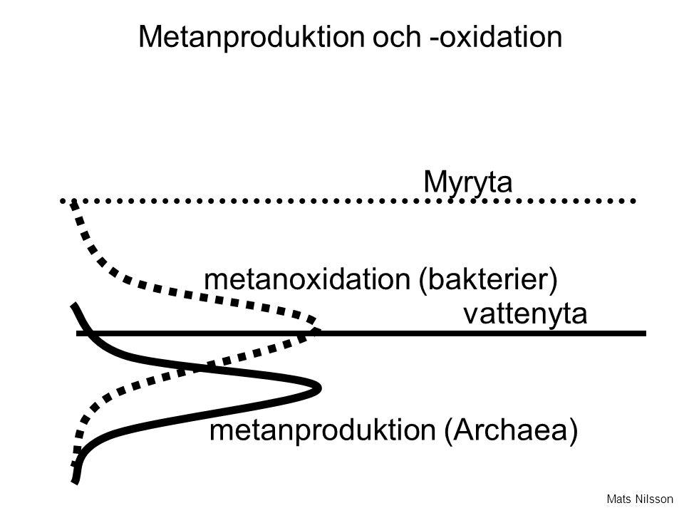 Metanproduktion och -oxidation metanproduktion (Archaea) metanoxidation (bakterier) Myryta vattenyta Mats Nilsson