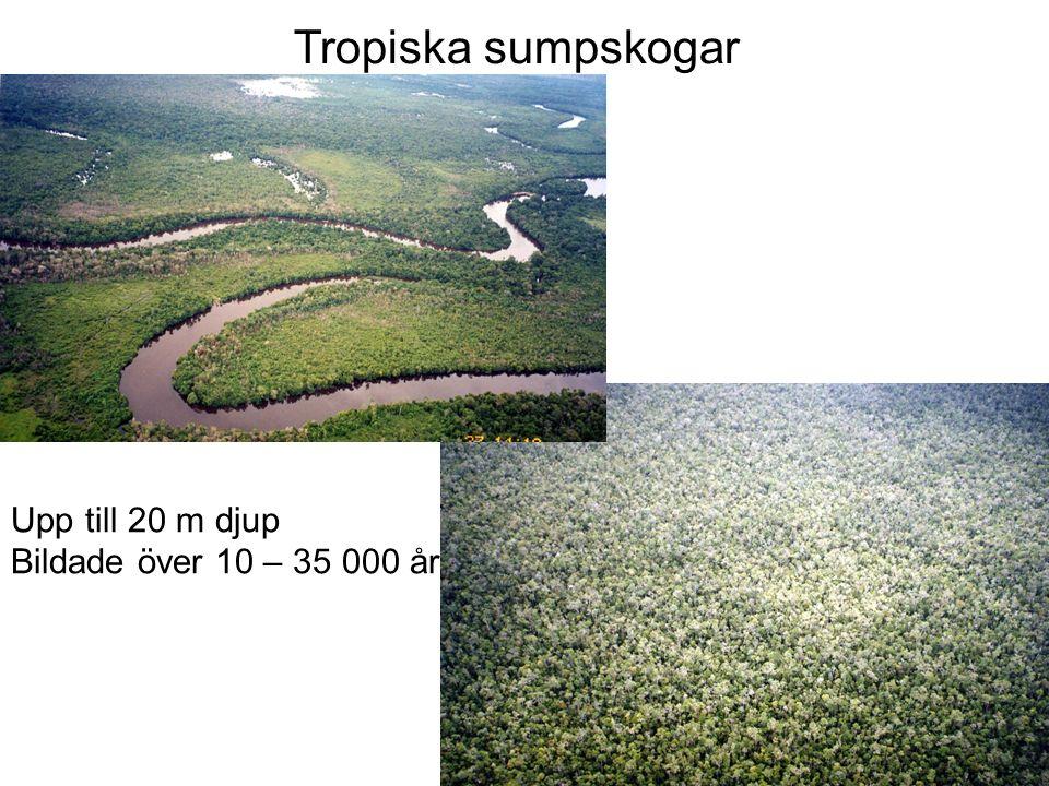 Upp till 20 m djup Bildade över 10 – 35 000 år Tropiska sumpskogar