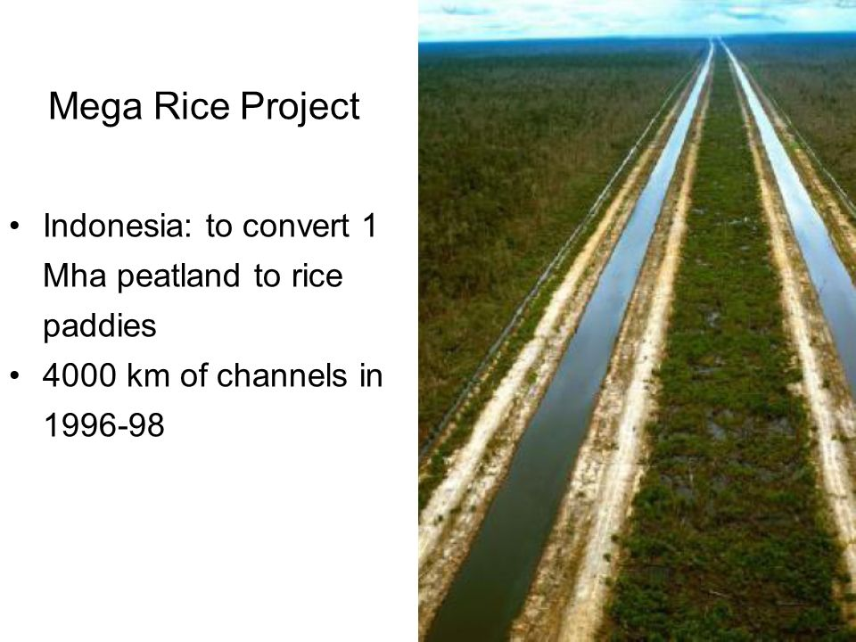 Indonesia: to convert 1 Mha peatland to rice paddies 4000 km of channels in 1996-98 Mega Rice Project