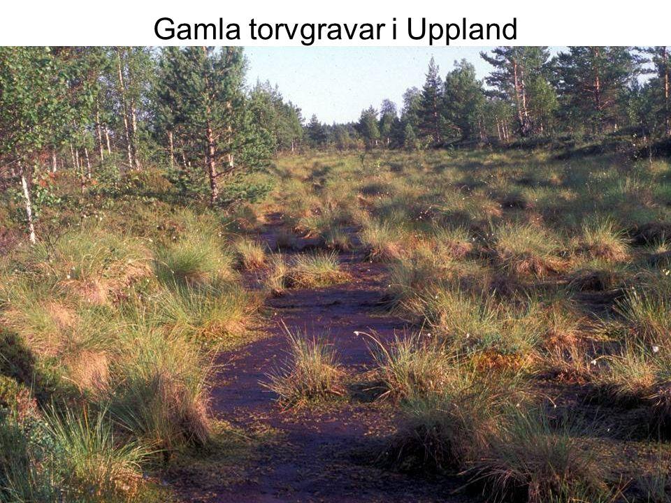 Gamla torvgravar i Uppland