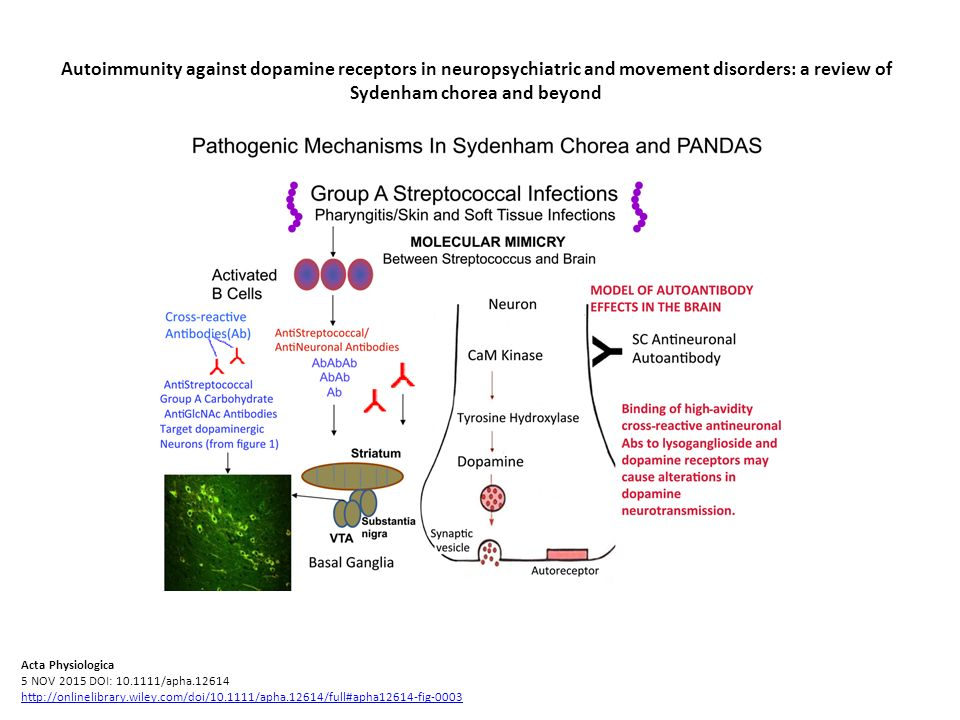 Autoimmunity against dopamine receptors in neuropsychiatric and movement disorders: a review of Sydenham chorea and beyond Acta Physiologica 5 NOV 201