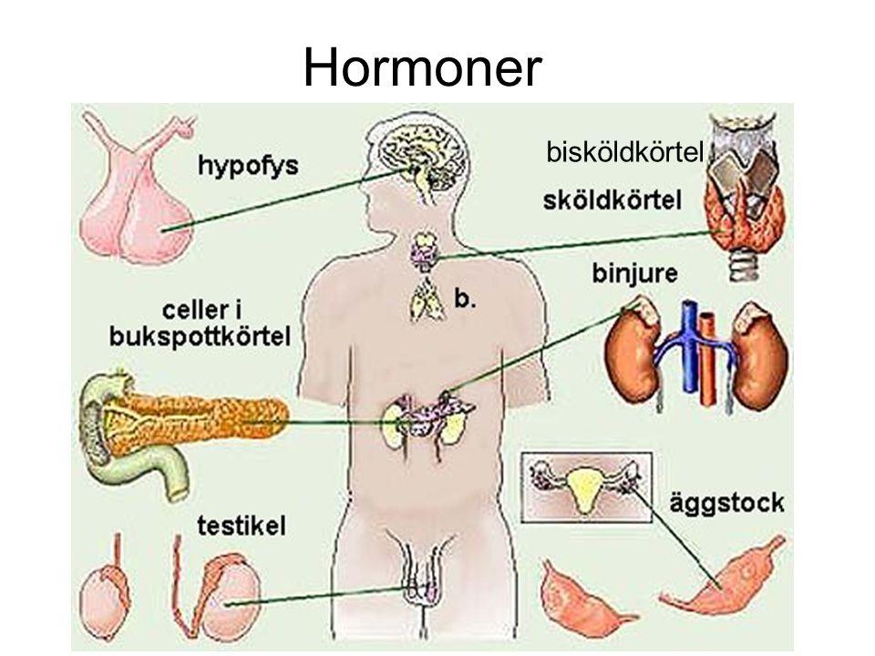 Hormoner bisköldkörtel