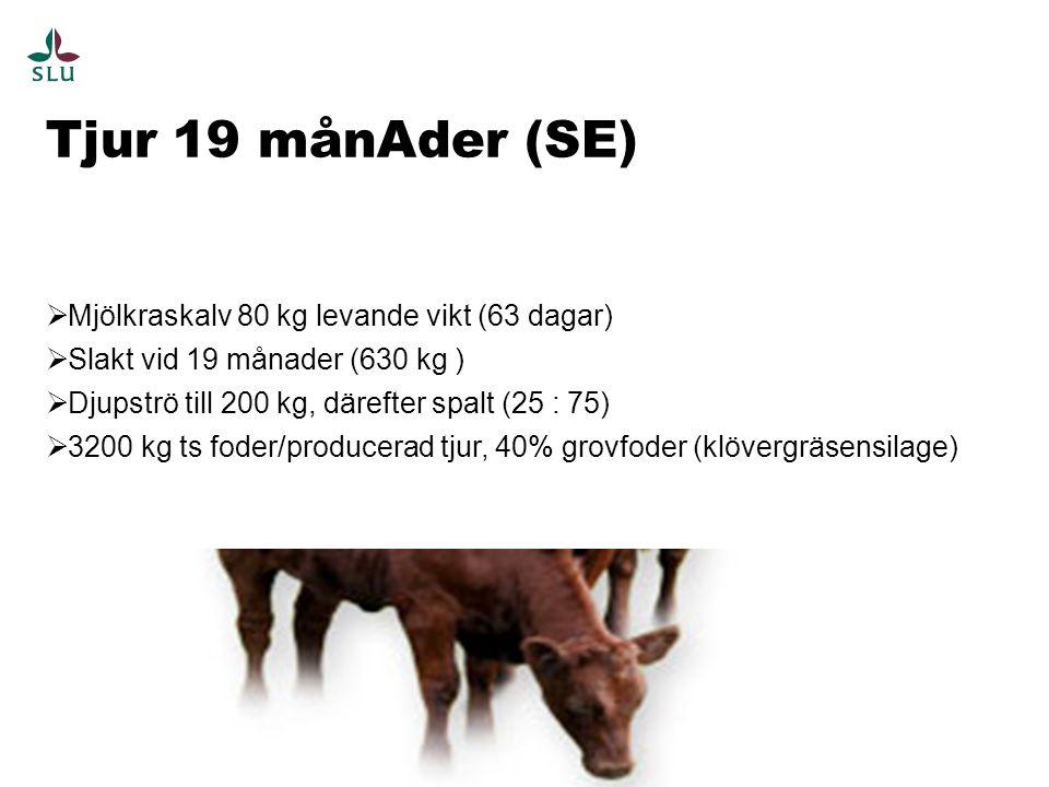 Tjur 19 månAder (SE) 10  Mjölkraskalv 80 kg levande vikt (63 dagar)  Slakt vid 19 månader (630 kg )  Djupströ till 200 kg, därefter spalt (25 : 75)  3200 kg ts foder/producerad tjur, 40% grovfoder (klövergräsensilage)