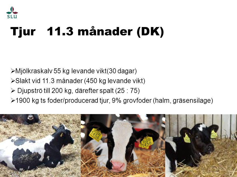 Tjur 11.3 månader (DK) 11  Mjölkraskalv 55 kg levande vikt(30 dagar)  Slakt vid 11.3 månader (450 kg levande vikt)  Djupströ till 200 kg, därefter spalt (25 : 75)  1900 kg ts foder/producerad tjur, 9% grovfoder (halm, gräsensilage)