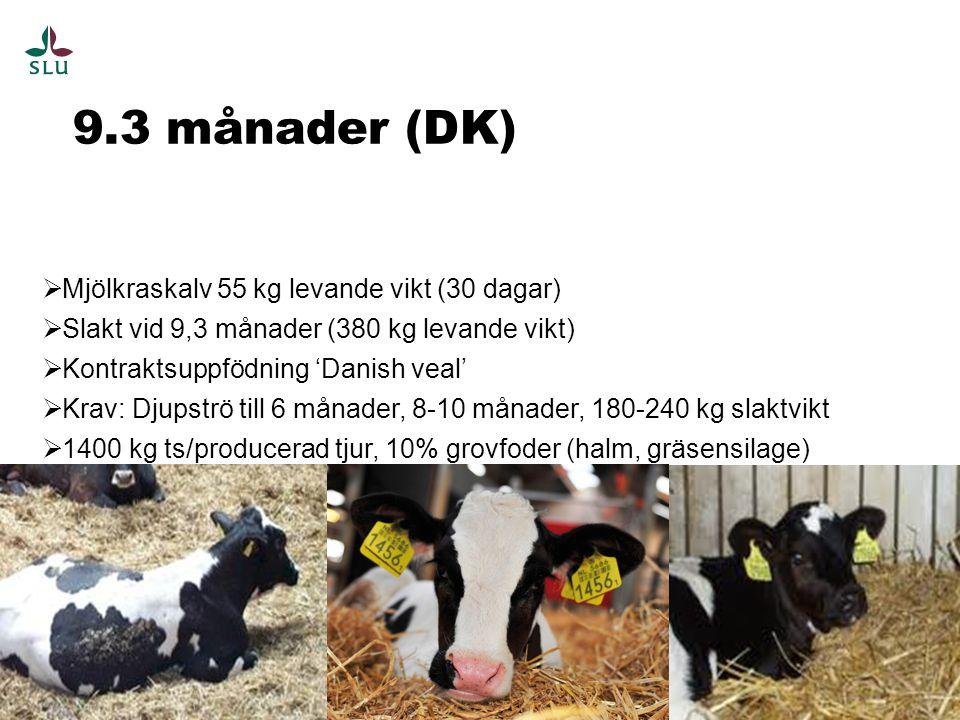 9.3 månader (DK) 12  Mjölkraskalv 55 kg levande vikt (30 dagar)  Slakt vid 9,3 månader (380 kg levande vikt)  Kontraktsuppfödning 'Danish veal'  Krav: Djupströ till 6 månader, 8-10 månader, 180-240 kg slaktvikt  1400 kg ts/producerad tjur, 10% grovfoder (halm, gräsensilage)