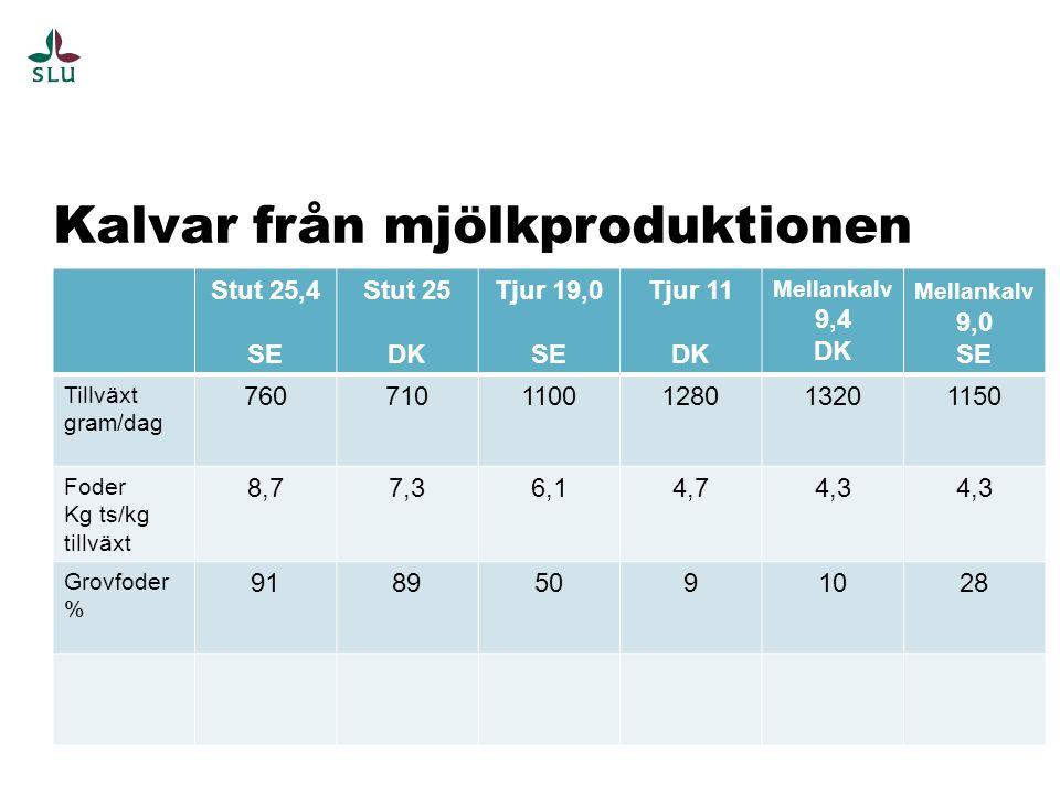 Kalvar från mjölkproduktionen Stut 25,4 SE Stut 25 DK Tjur 19,0 SE Tjur 11 DK Mellankalv 9,4 DK Mellankalv 9,0 SE Tillväxt gram/dag 7607101100128013201150 Foder Kg ts/kg tillväxt 8,77,36,14,74,3 Grovfoder % 91895091028