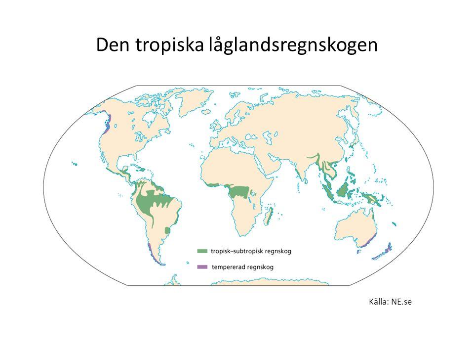 Den tropiska låglandsregnskogen Källa: NE.se