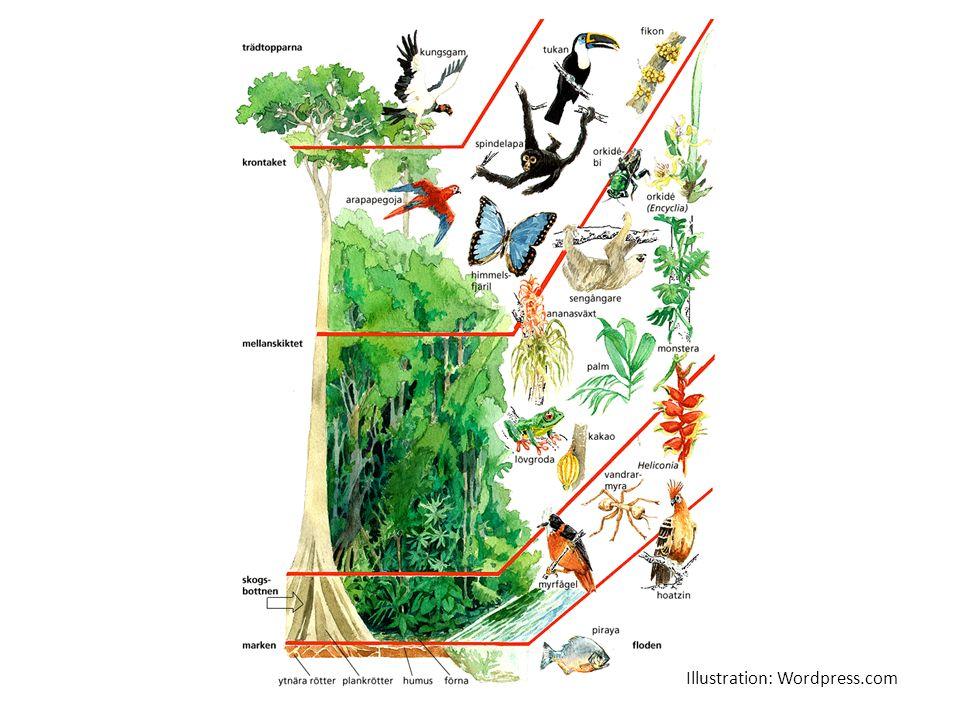 Varför är regnskogen viktig.