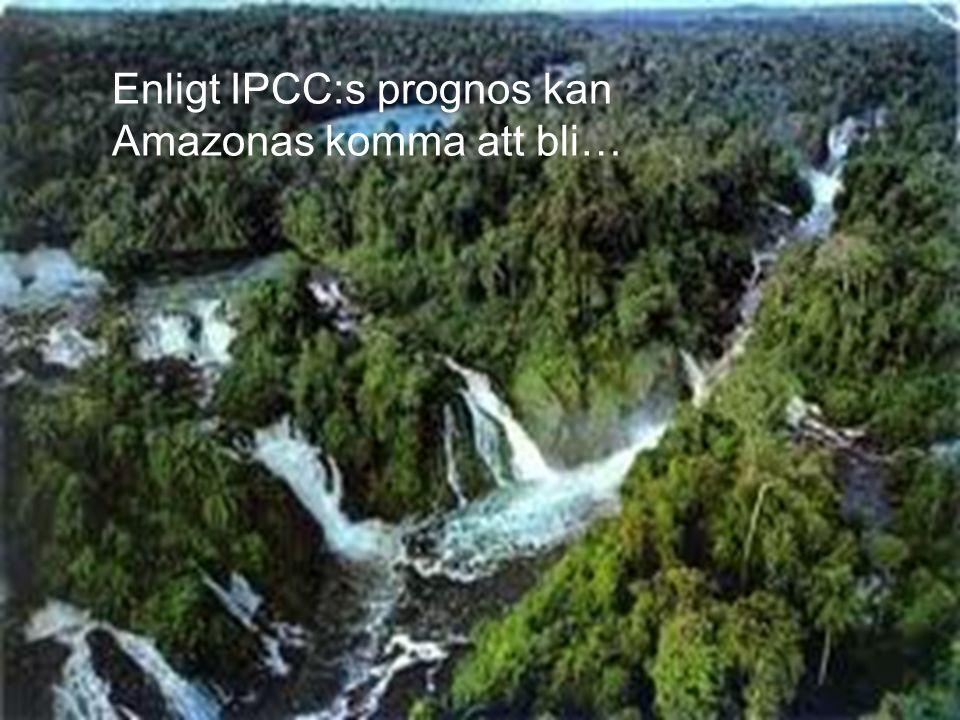Enligt IPCC:s prognos kan Amazonas komma att bli…