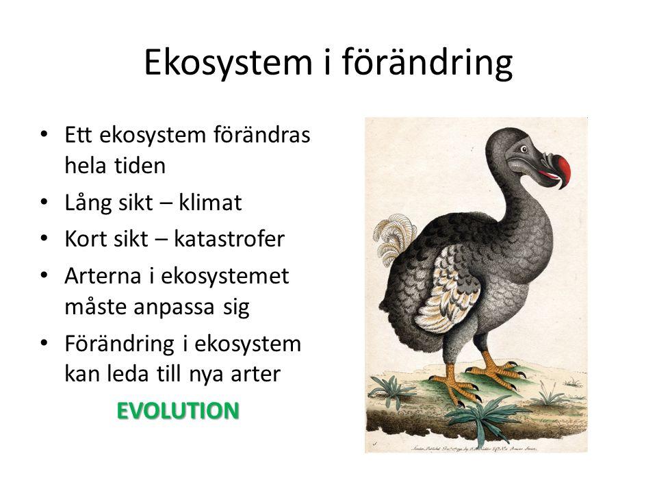 Ekosystem i förändring Ett ekosystem förändras hela tiden Lång sikt – klimat Kort sikt – katastrofer Arterna i ekosystemet måste anpassa sig Förändring i ekosystem kan leda till nya arterEVOLUTION