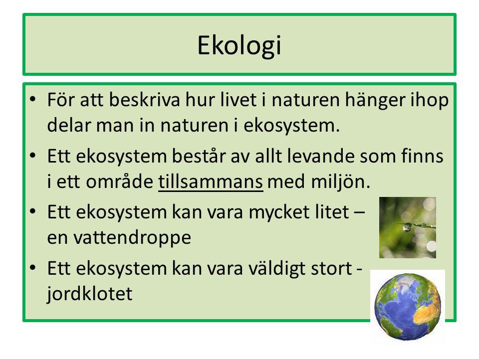 Ekologi För att beskriva hur livet i naturen hänger ihop delar man in naturen i ekosystem.