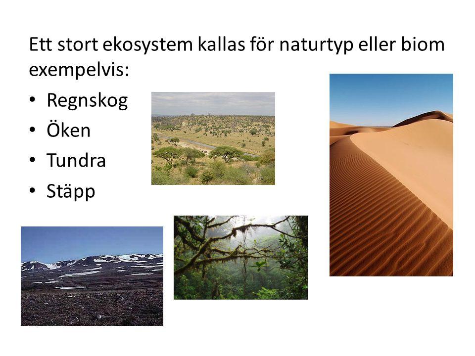 Ett stort ekosystem kallas för naturtyp eller biom exempelvis: Regnskog Öken Tundra Stäpp
