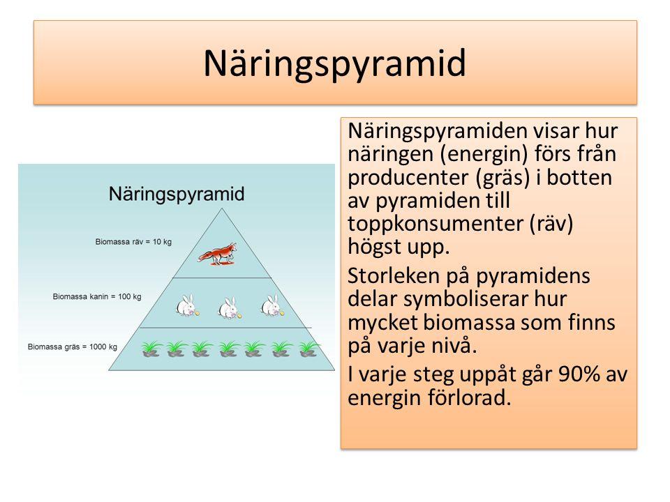 Näringspyramid Näringspyramiden visar hur näringen (energin) förs från producenter (gräs) i botten av pyramiden till toppkonsumenter (räv) högst upp.