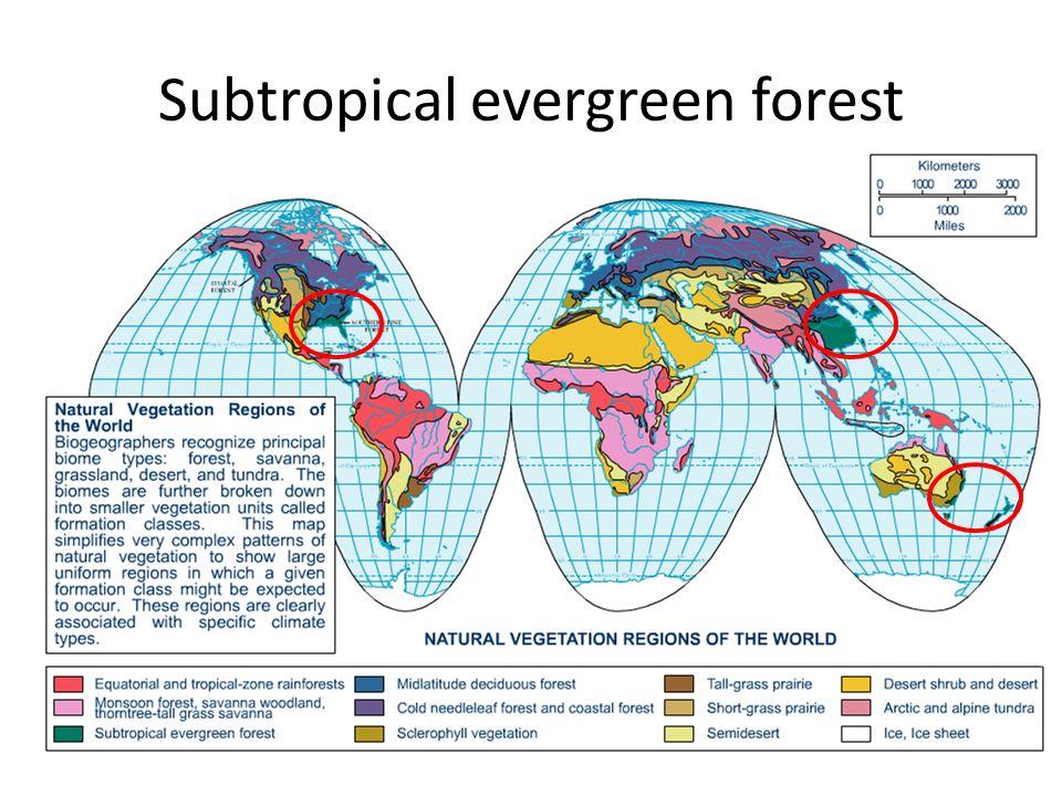 Jordmån Jordmånen är huvudsakligen samma som i tropikerna, Ultisol (USDA) / Acrisols (FAO), vilket innebär mycket näringsfattiga jordar med mindre än 10% vittringsbart material kvar, och höga halter av järn/aluminiumoxider (därav den gulröda färgen) Det finns en tunn horizont med halter av organiskt material nära ytan, men om denna tas bort så blir jorden mycket vittringsbenägen, vilket gör att oaksamt jordbruk kan få allvarliga konsekvemser.