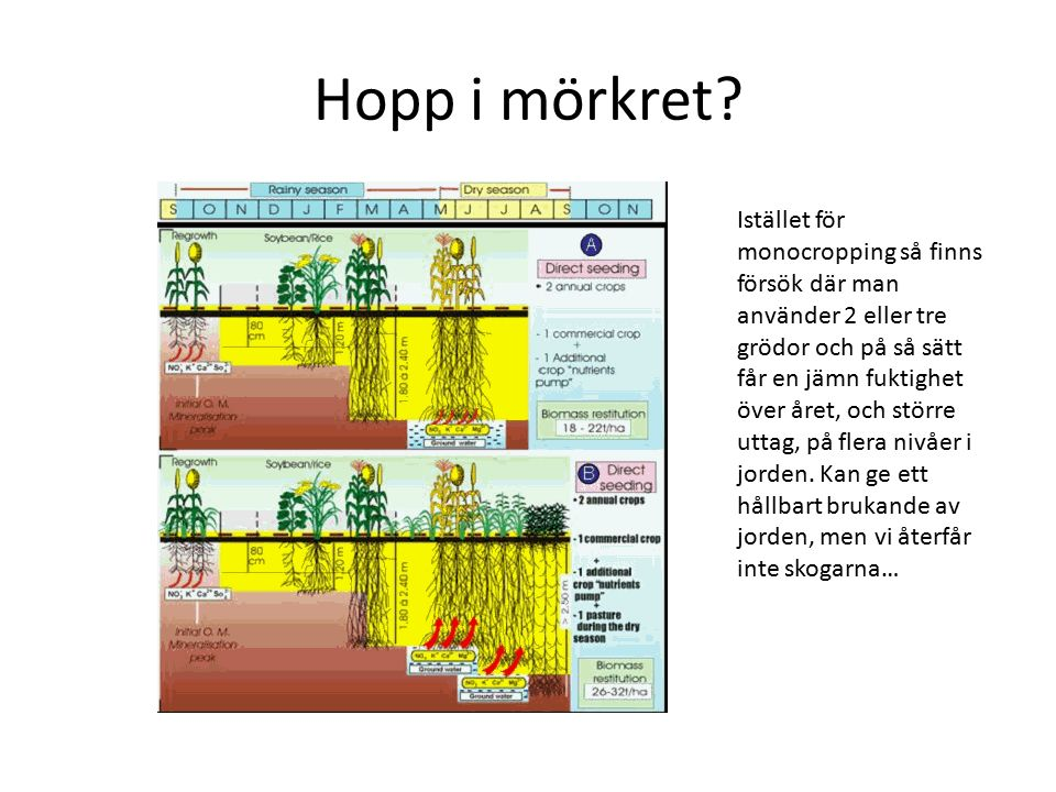 Hopp i mörkret? Istället för monocropping så finns försök där man använder 2 eller tre grödor och på så sätt får en jämn fuktighet över året, och stör