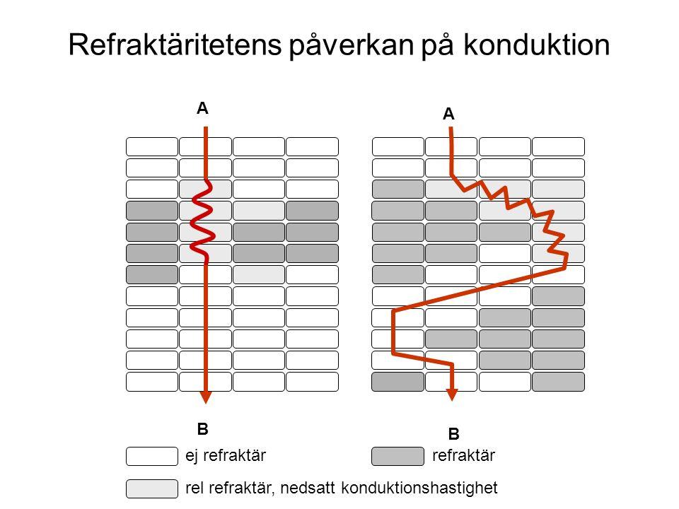 A B B A ej refraktärrefraktär Refraktäritetens påverkan på konduktion rel refraktär, nedsatt konduktionshastighet