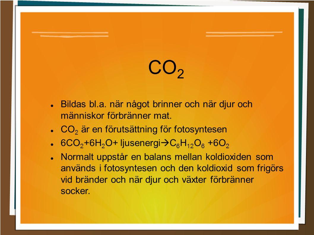 CO 2 Bildas bl.a. när något brinner och när djur och människor förbränner mat.