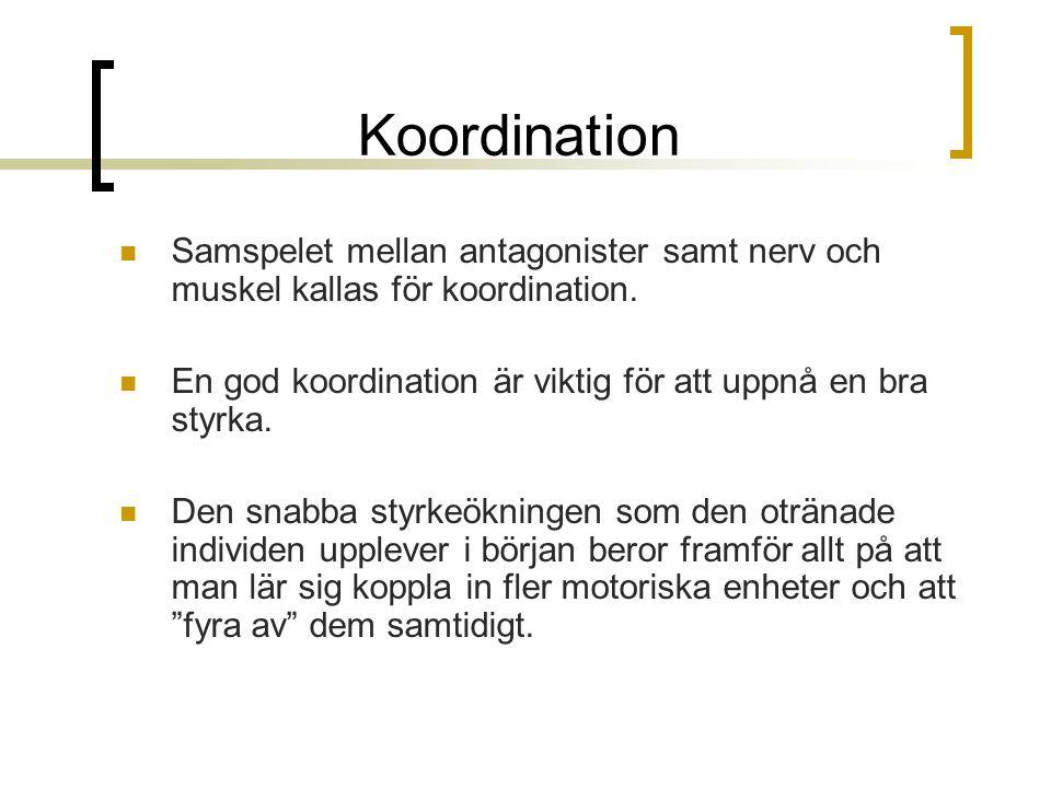 Koordination Samspelet mellan antagonister samt nerv och muskel kallas för koordination.
