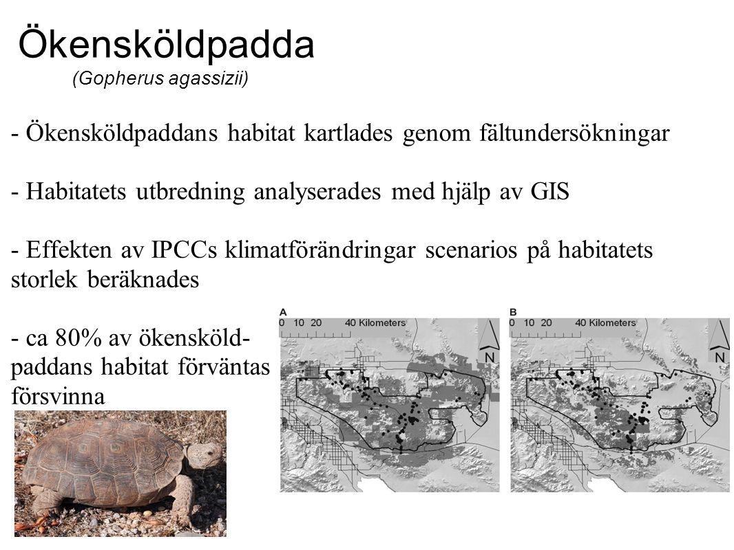 Ökensköldpadda (Gopherus agassizii) - Ökensköldpaddans habitat kartlades genom fältundersökningar - Habitatets utbredning analyserades med hjälp av GIS - Effekten av IPCCs klimatförändringar scenarios på habitatets storlek beräknades - ca 80% av ökensköld- paddans habitat förväntas försvinna