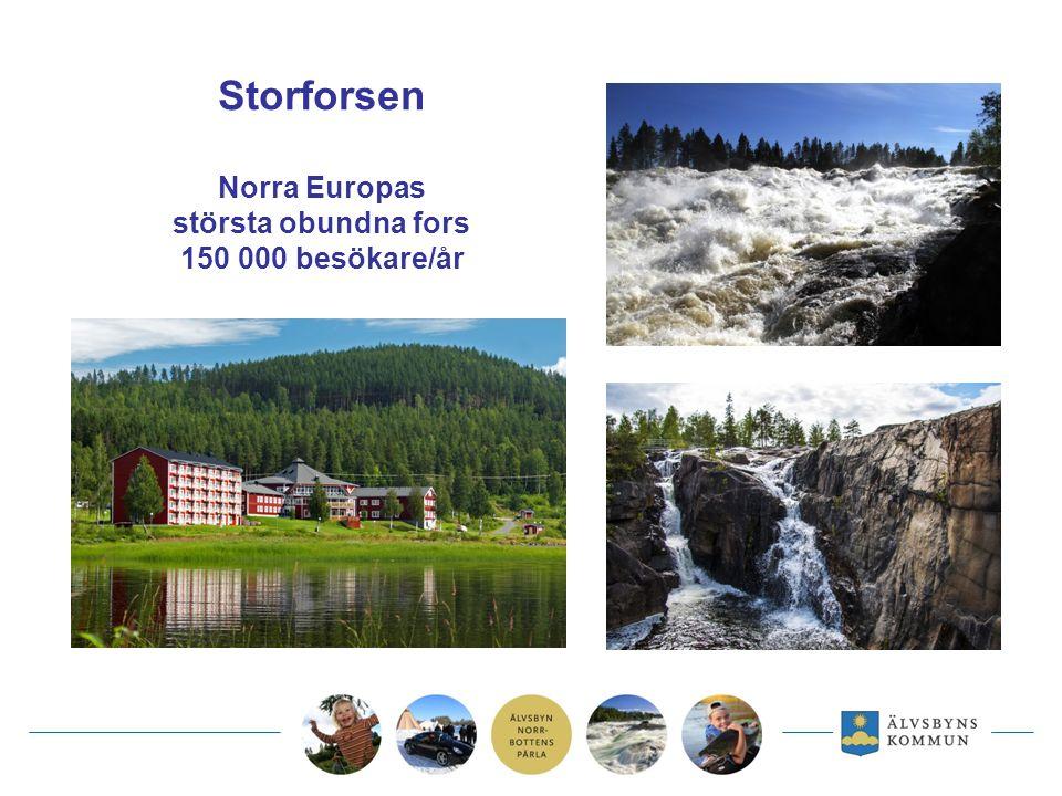 Storforsen Norra Europas största obundna fors 150 000 besökare/år