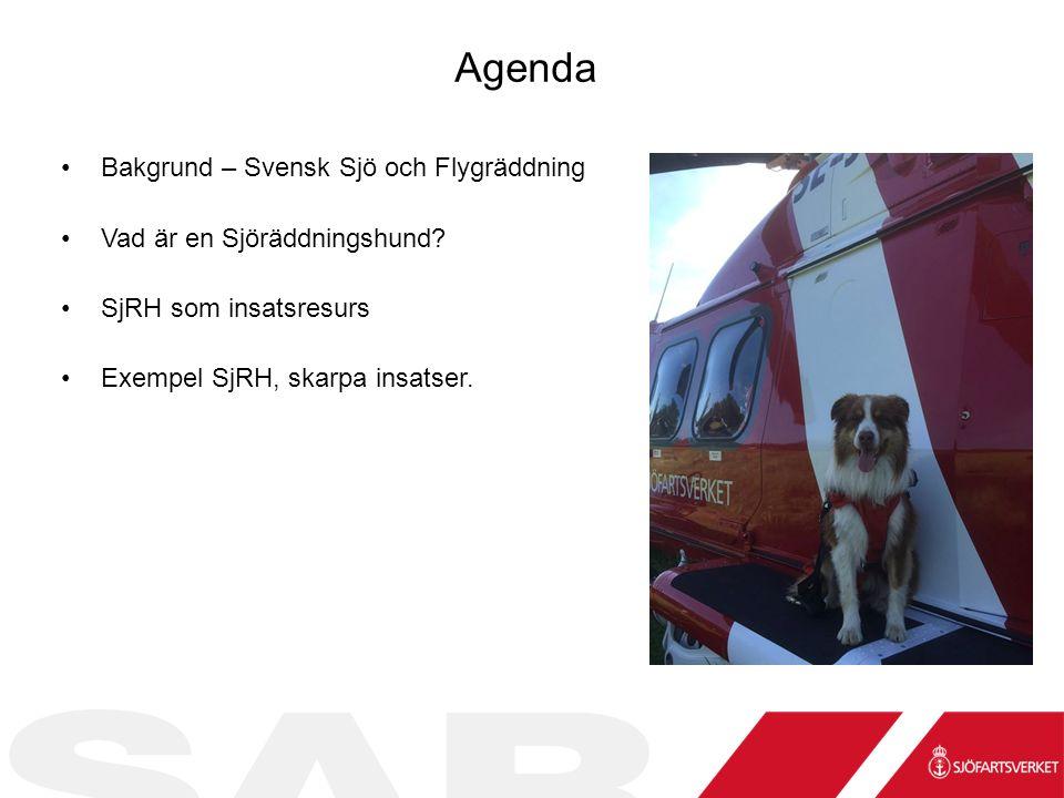Agenda Bakgrund – Svensk Sjö och Flygräddning Vad är en Sjöräddningshund.