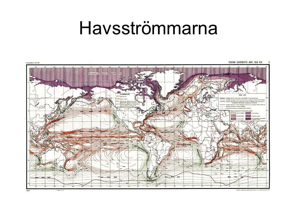 Havsströmmarna