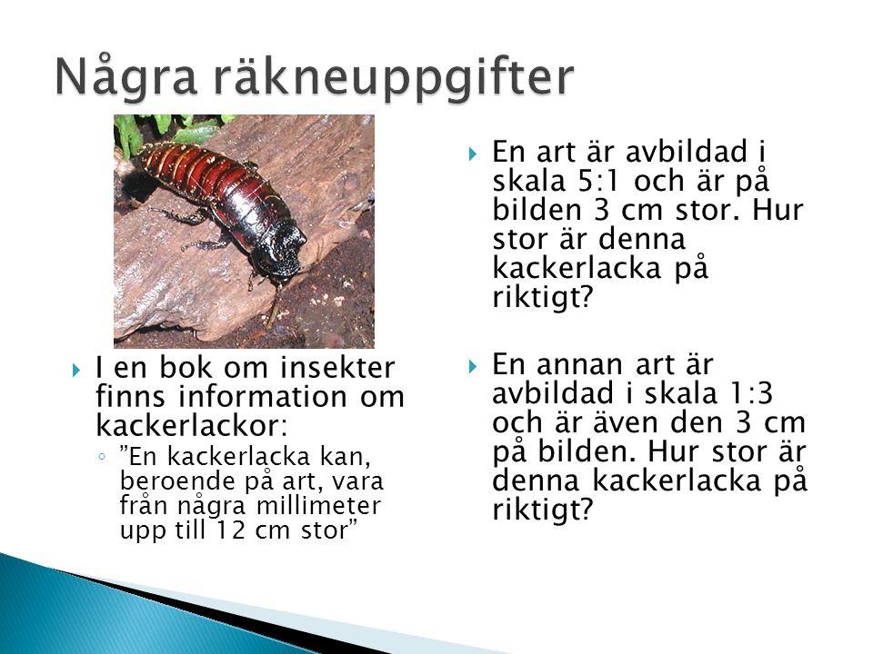 """ I en bok om insekter finns information om kackerlackor: ◦ """"En kackerlacka kan, beroende på art, vara från några millimeter upp till 12 cm stor""""  En"""