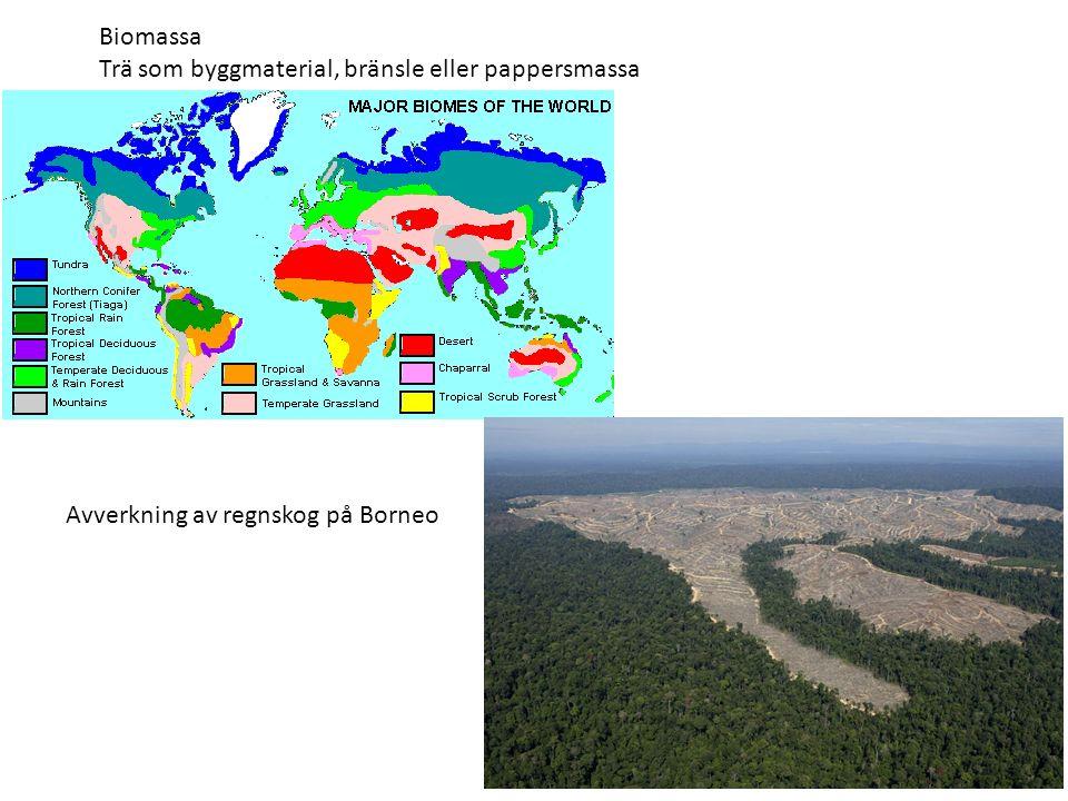Biomassa Trä som byggmaterial, bränsle eller pappersmassa Avverkning av regnskog på Borneo