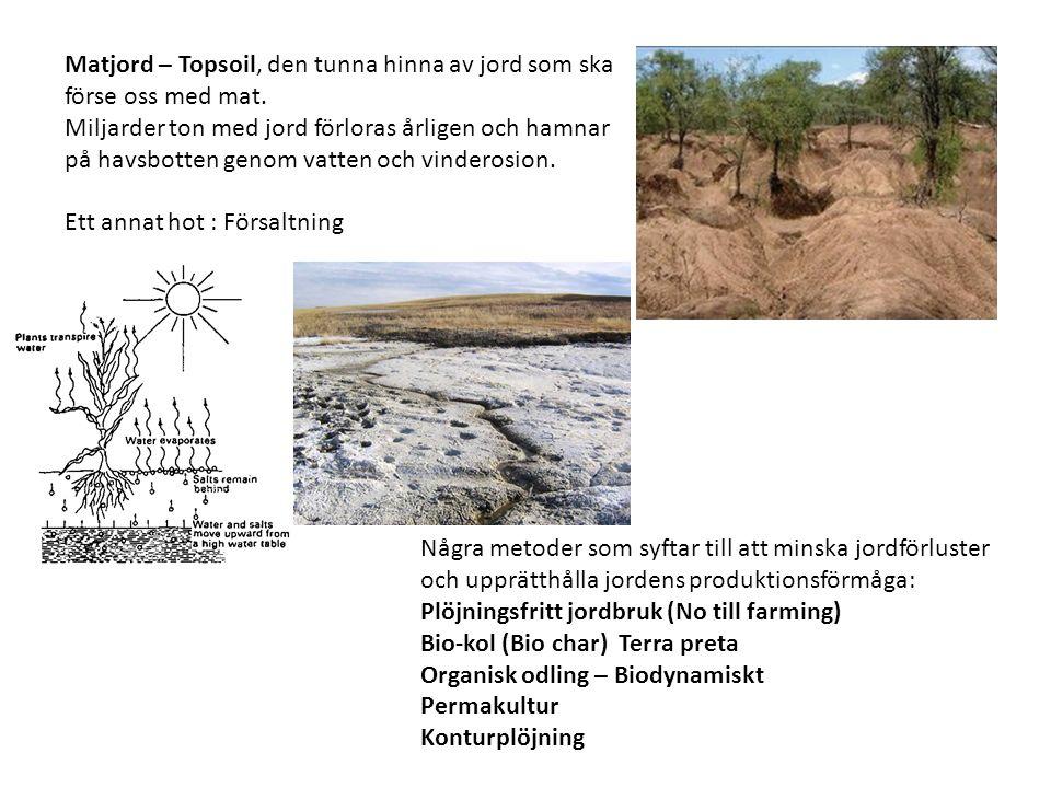 Matjord – Topsoil, den tunna hinna av jord som ska förse oss med mat.