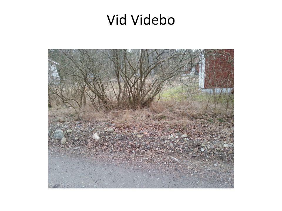 Vid Videbo