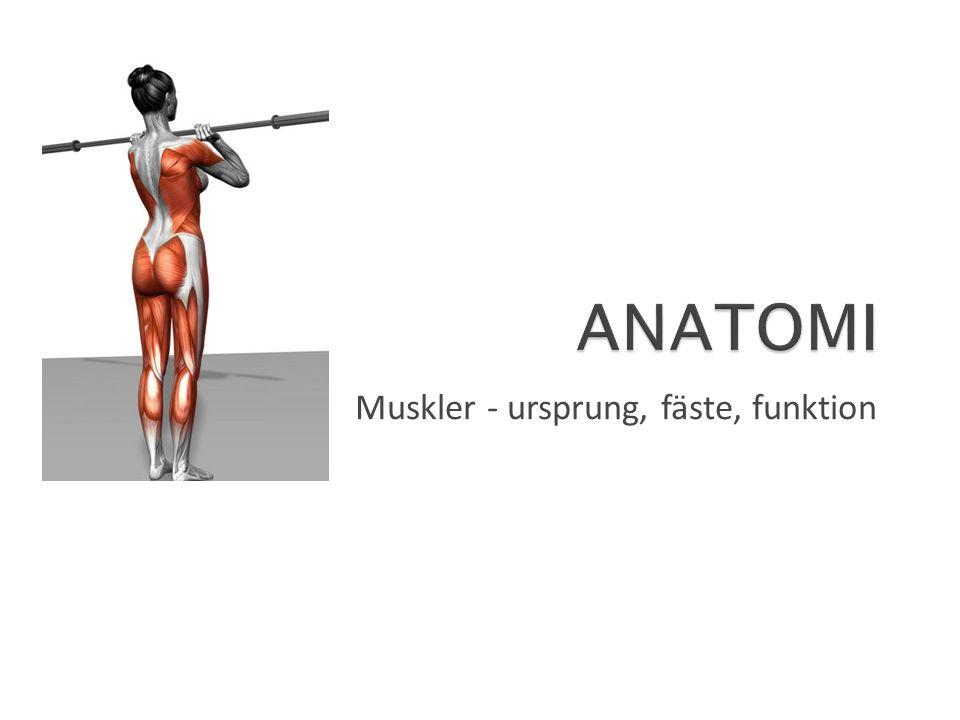 Rotator cuff Rotator Cuff / Rotatorkuffen Muskelgruppen består av fyra muskler, tre på baksidan (Supraspinatus, Infraspinatus, Teres Minor) som möjliggör en utåtrotation och en på framsidan (Subscapularis) som gör inåtrotation Ursprung: skulderbladet (Scapula) Fäste: överarmsbenet (Humerus) Funktion: stabiliserar axelleden och gör en utåt- och en inåtrotation i axelleden Tips på träningsövningar: utåtrotation, inåtrotation Antagonister: axelmuskeln (M.