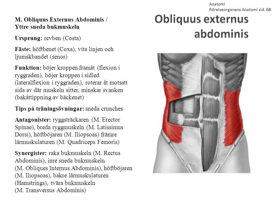 Obliquus externus abdominis M. Obliquus Externus Abdominis / Yttre sneda bukmuskeln Ursprung: revben (Costa) Fäste: höftbenet (Coxa), vita linjen och