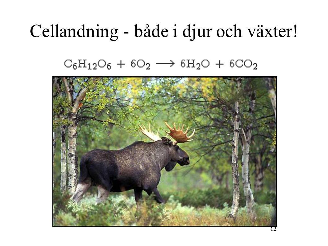 12 Cellandning - både i djur och växter! 12