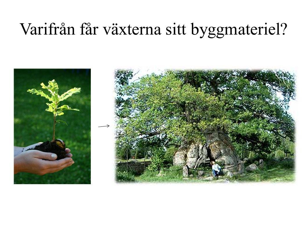 Varifrån får växterna sitt byggmateriel?