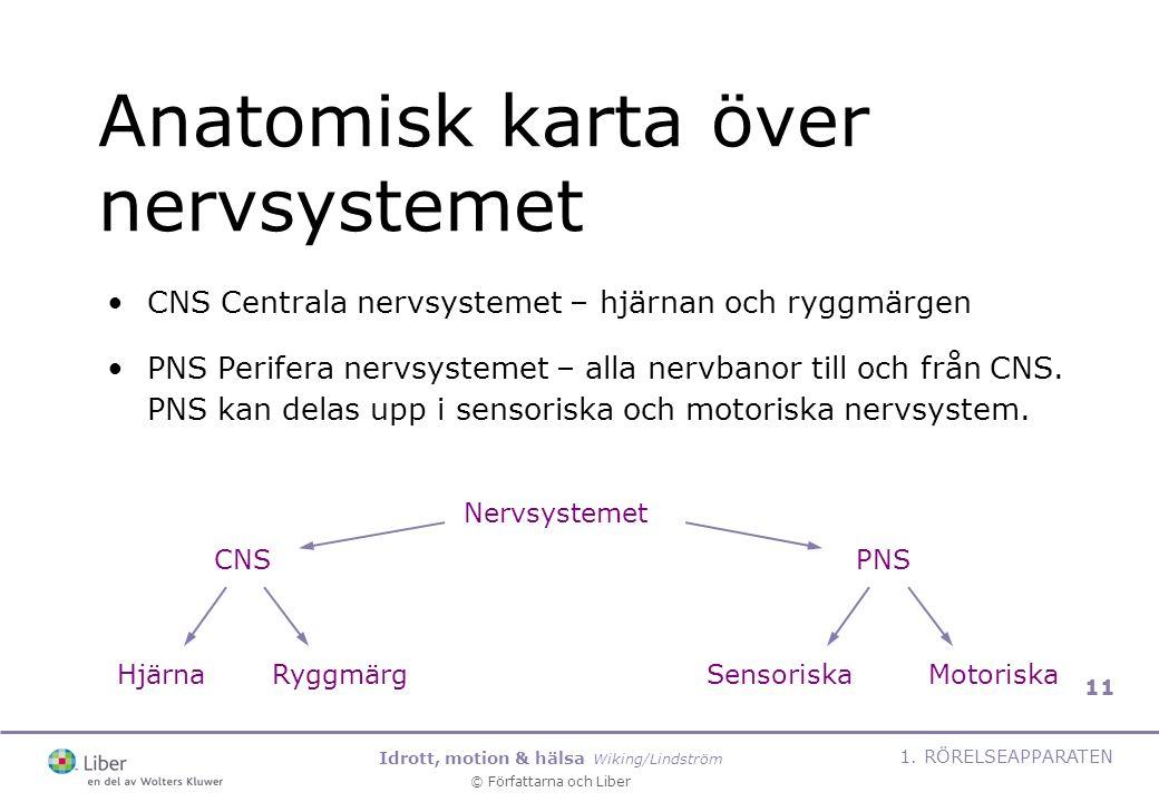 Idrott, motion & hälsa Wiking/Lindström © Författarna och Liber 1. RÖRELSEAPPARATEN 11 Anatomisk karta över nervsystemet CNS Centrala nervsystemet – h