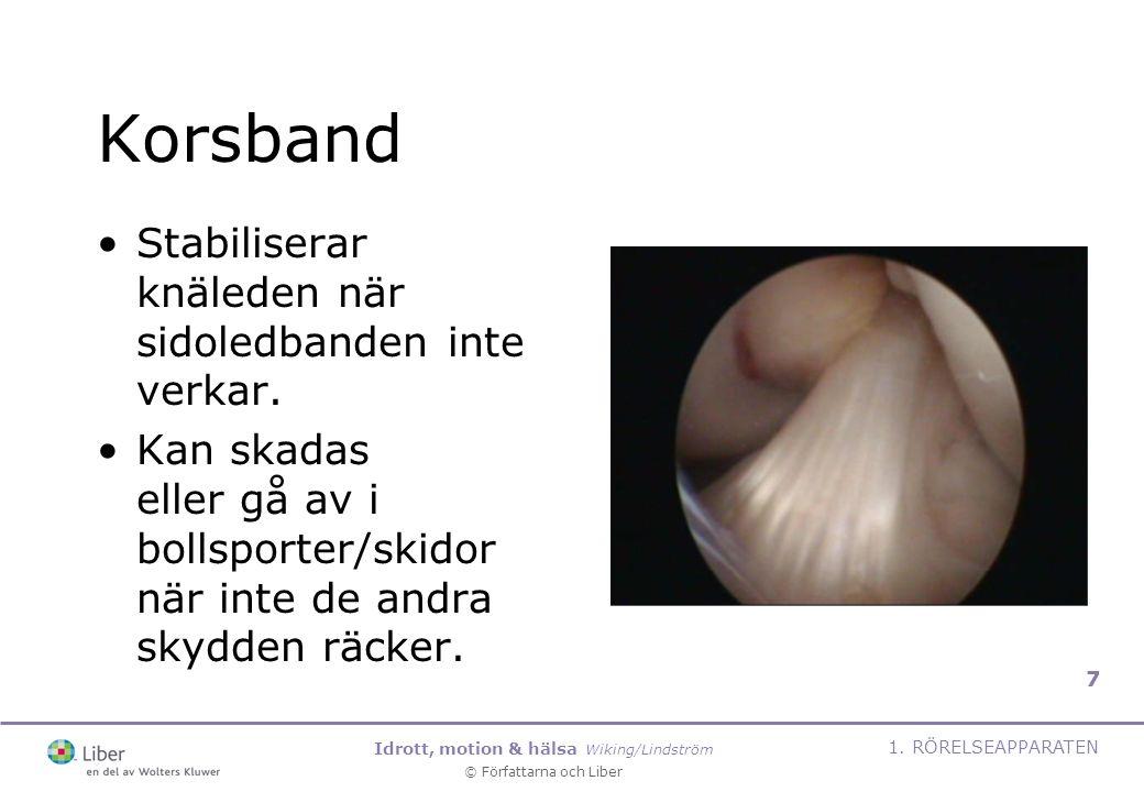 Idrott, motion & hälsa Wiking/Lindström © Författarna och Liber 1. RÖRELSEAPPARATEN 7 Korsband Stabiliserar knäleden när sidoledbanden inte verkar. Ka