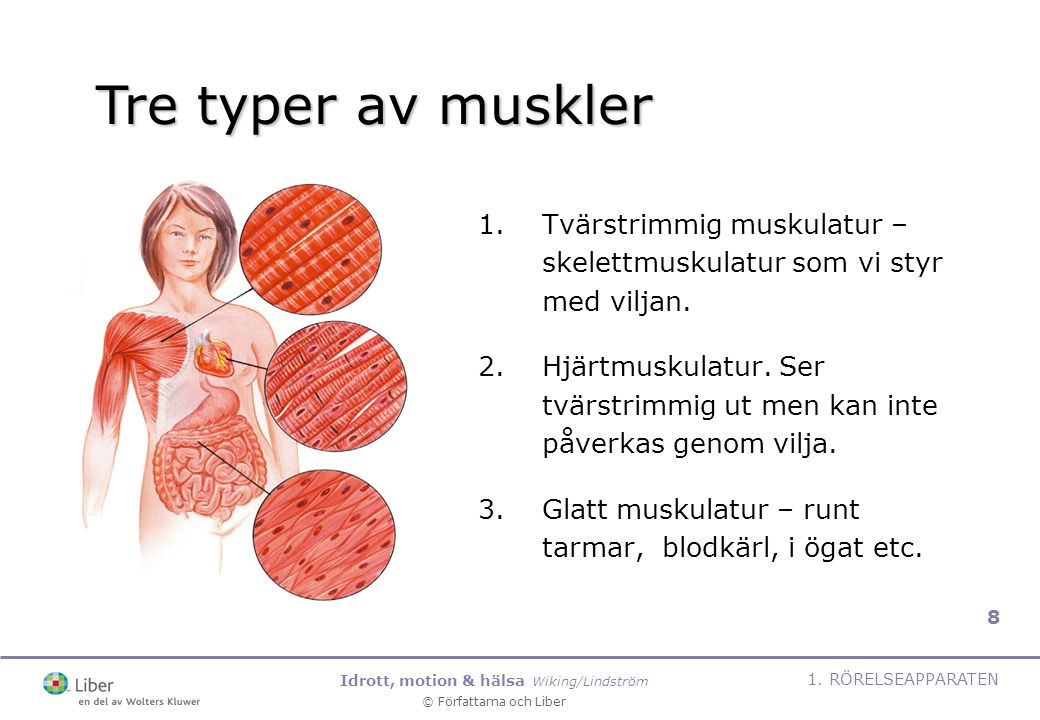 Idrott, motion & hälsa Wiking/Lindström © Författarna och Liber 1. RÖRELSEAPPARATEN 8 1.Tvärstrimmig muskulatur – skelettmuskulatur som vi styr med vi