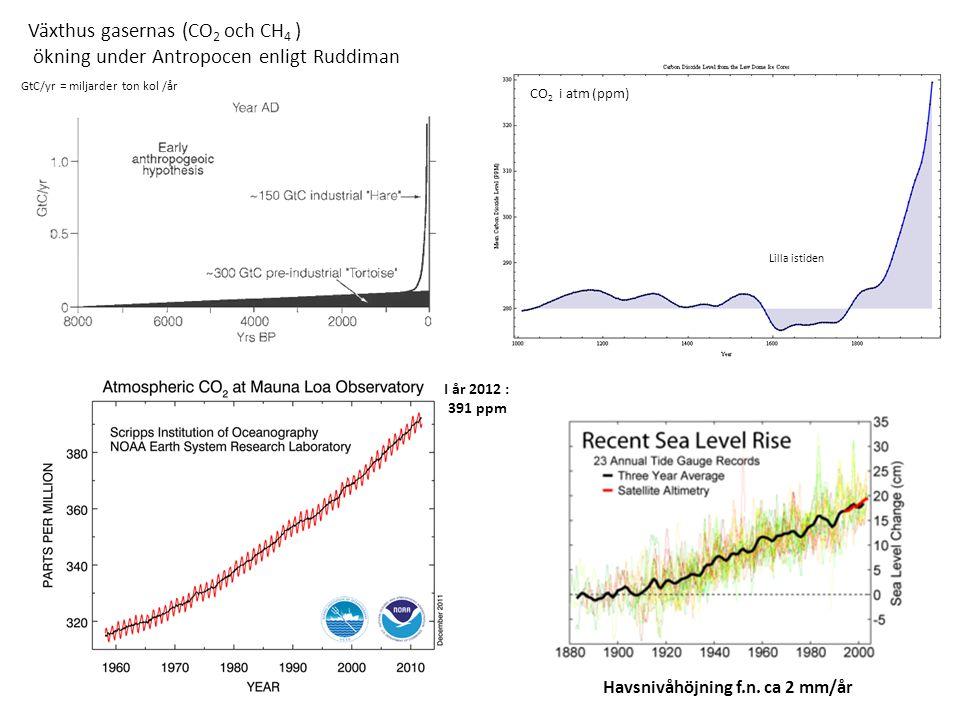Växthus gasernas (CO 2 och CH 4 ) ökning under Antropocen enligt Ruddiman I år 2012 : 391 ppm Havsnivåhöjning f.n.