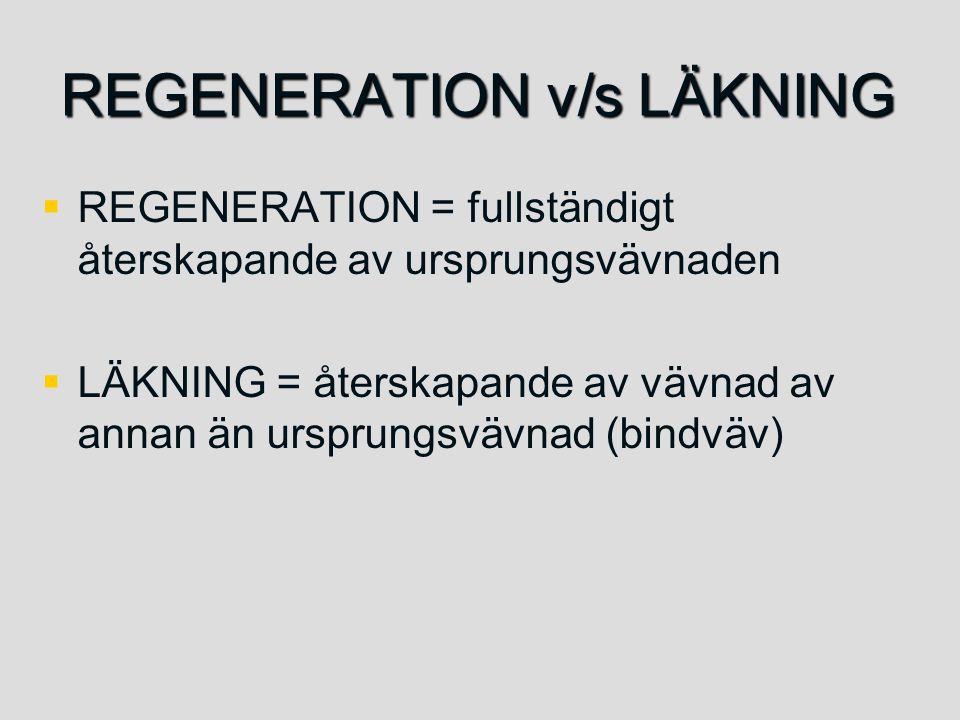 REGENERATION v/s LÄKNING   REGENERATION = fullständigt återskapande av ursprungsvävnaden   LÄKNING = återskapande av vävnad av annan än ursprungsv