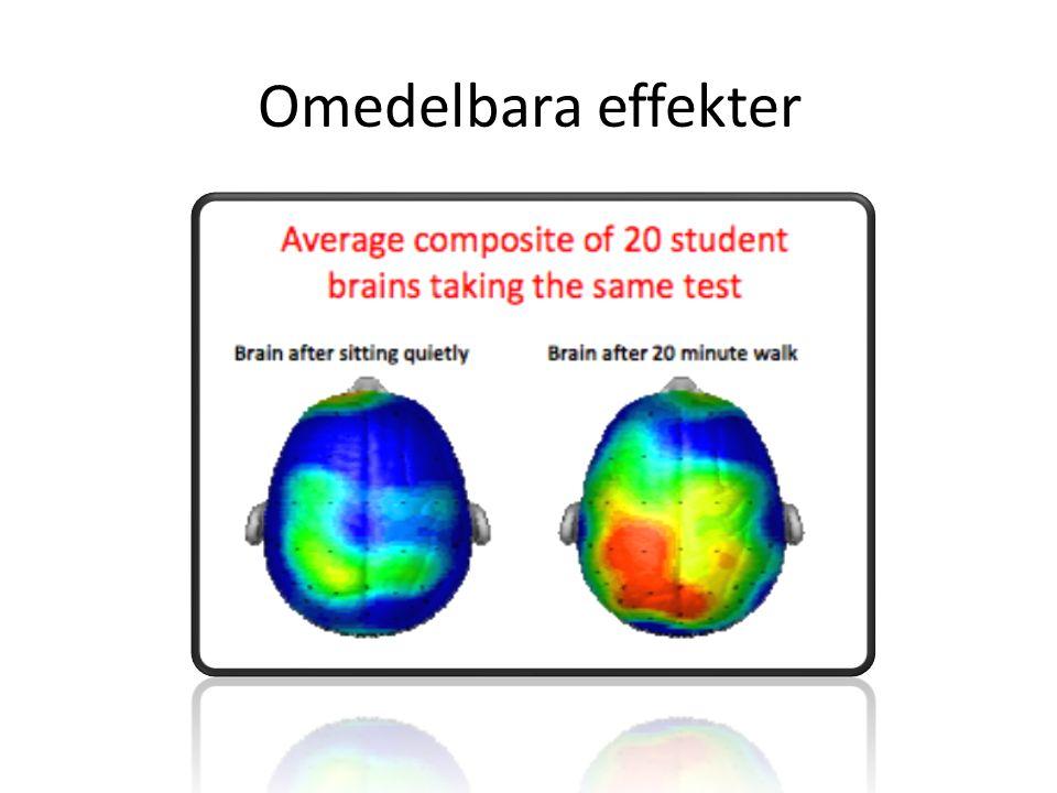 Långsiktiga effekter BDNF Brain-derived neurotrophic factor Signalprotein Ökar tillväxt av både synapser samt hjärnceller Påverkar kognitiva förmågor såsom minne och inlärning