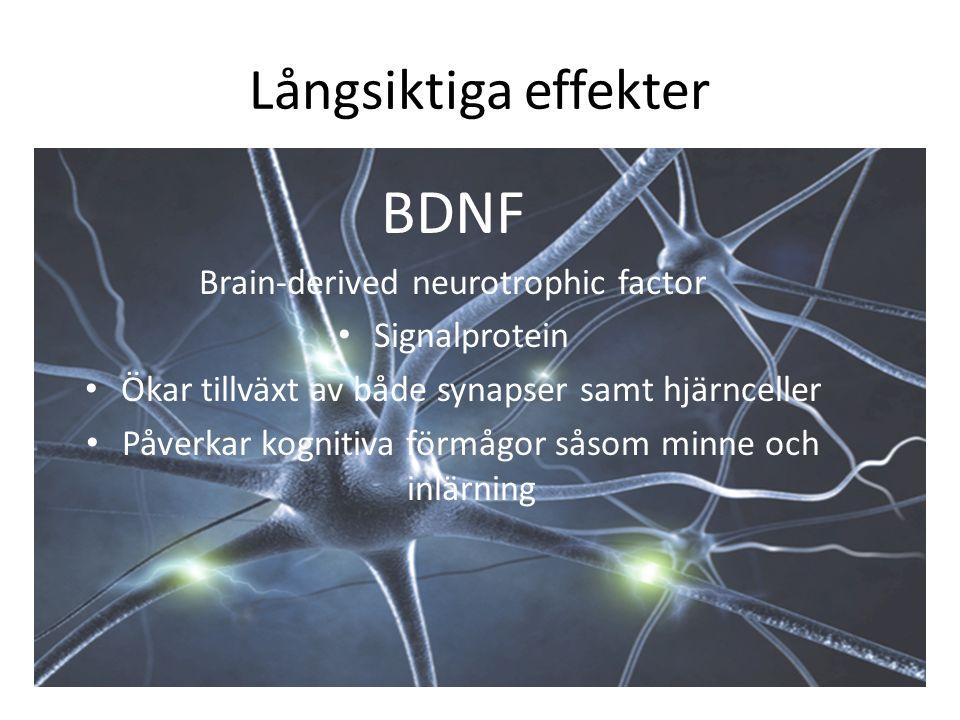 LÅNGSIKTIGA EFFEKTER Akademiska Ökad läsförståelse Bättre språkinlärning Förbättrade matematikresultat Psyko- sociala Motivation Stressreducering Vi-känsla Känsla av att man mår bättre av detta Ökad närvaro Fysiska Mer elastisk hjärna Fler hjärnceller Snabbare kopplingar i hjärnan (synapser) Hälsa Uthållighet Styrka Smidighet