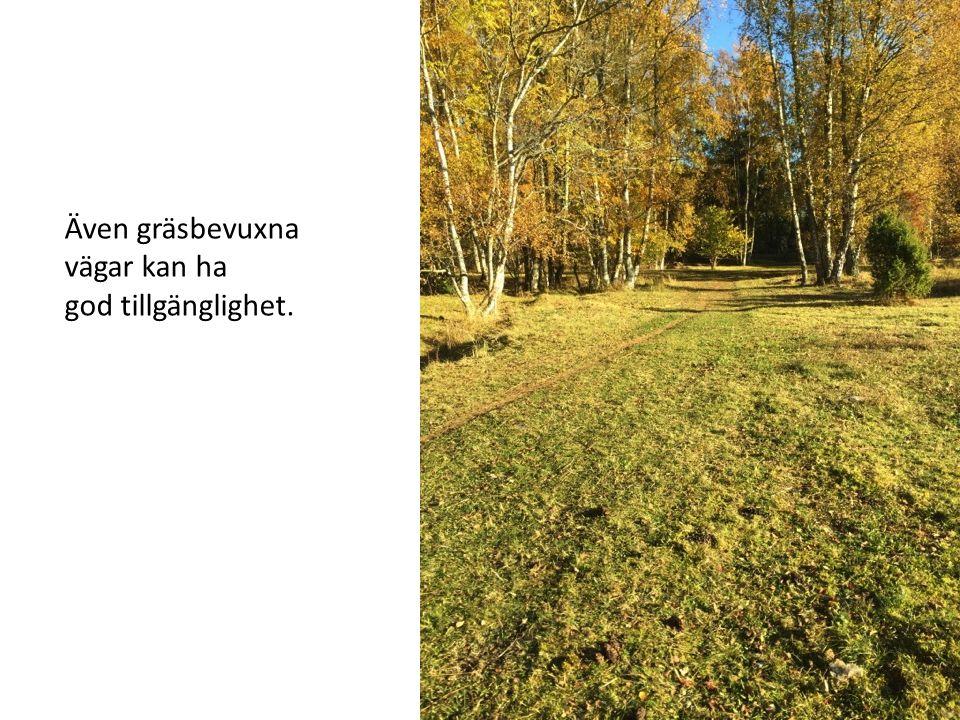 Även gräsbevuxna vägar kan ha god tillgänglighet.