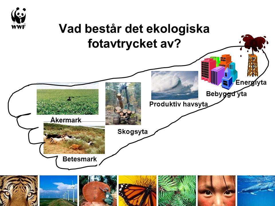 Vad består det ekologiska fotavtrycket av.